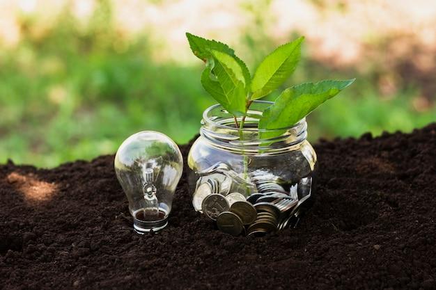 Słój z oszczędnościami i małym drzewkiem w ziemi