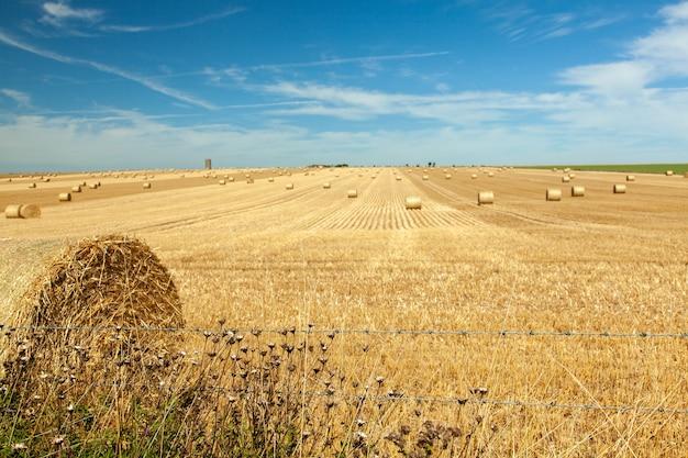 Słomiany krajobraz pola z błękitnym niebem