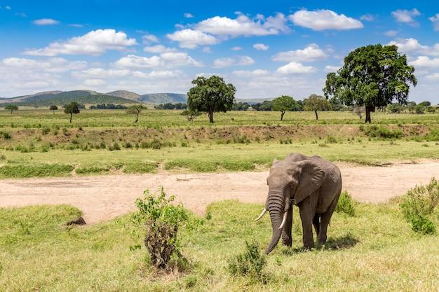 Słoń afrykański w parku narodowym masai mara. kenia, afryka.