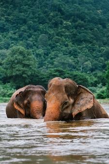 Słoń azjatycki w przyrodzie w głębokim lesie w tajlandii