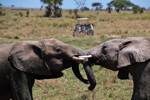 Słoń na safari w kenii i tanzanii, afryka