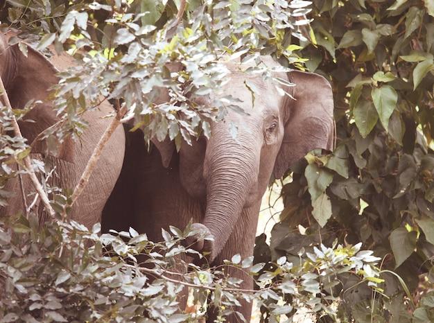 Słoń na sawannie