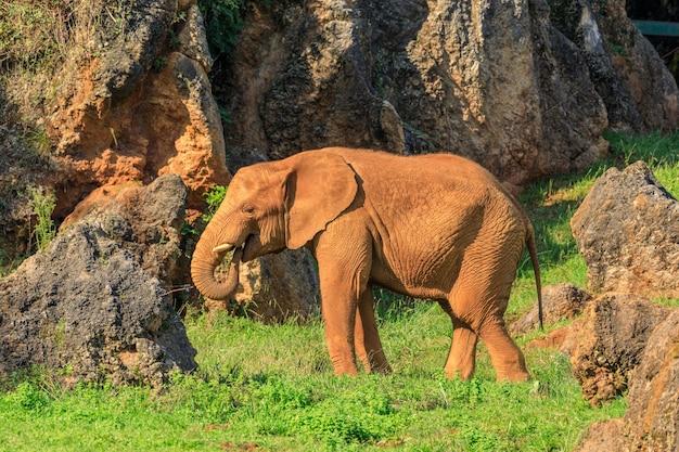 Słoń o zachodzie słońca w parku przyrody cabarceno w hiszpanii
