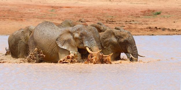 Słoń w jeziorze. park narodowy kenii