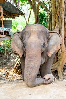 Słoń w tajlandii
