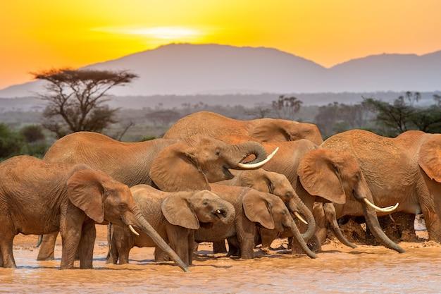 Słoń w wodzie na zachód słońca. park narodowy kenii, afryka