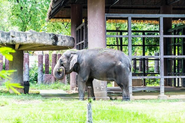 Słoń W Zoo Premium Zdjęcia