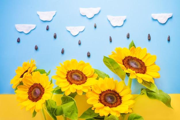 Słońce kwiat z bawełnianymi chmurami i ziarnami odizolowywającymi nad flaga ucranian. jaskrawi mali słoneczniki na żółtym i błękitnym tle.