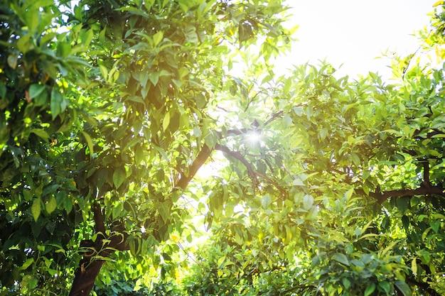 Słońce nad koronami drzew
