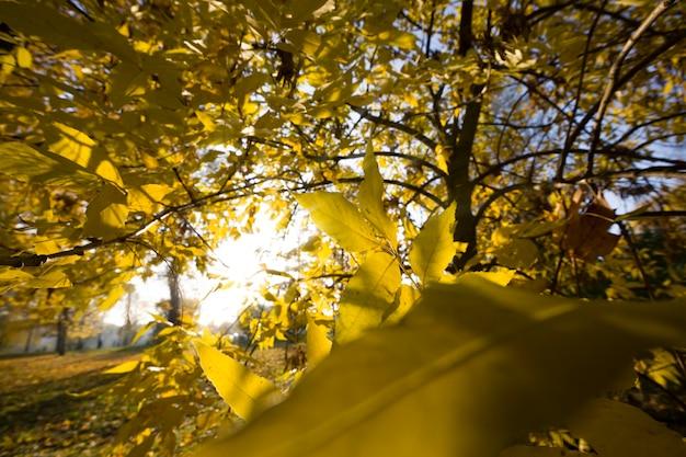Słońce oświetla pożółkłe liście.