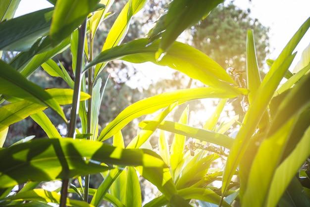 Słońce promienieje na tropikalnych roślinach