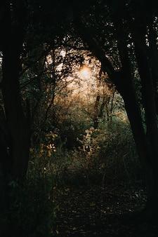 Słońce przedzierające się przez leśne drzewa