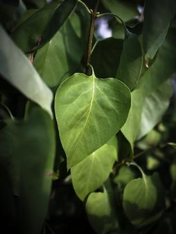 Słońce sunące przez zielone liście pośrodku lasu