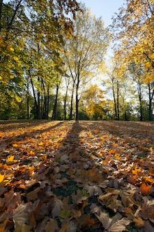 Słońce świecące za koronami drzew, oświetlające liście zwalonych na ziemię drzew, jesienna słoneczna pogoda, krajobraz w parku