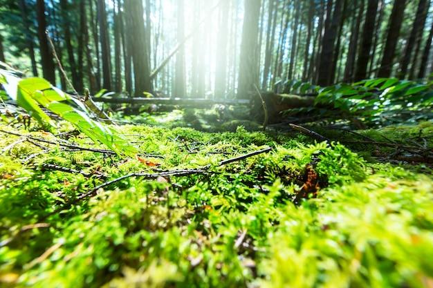 Słońce świeci w pogodny dzień w zielonym lesie