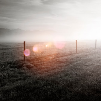 Słońce świeciło na pole pokryte mgłą.
