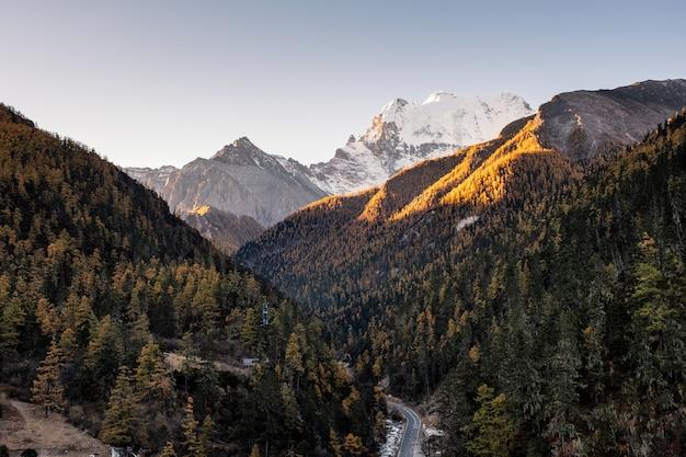 Słońce w górach z sosnowego lasu jesienią w yading