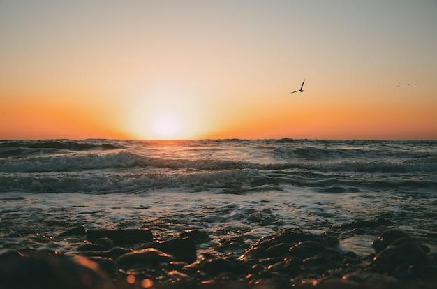 Słońce wschodzi na morzu z ptakami