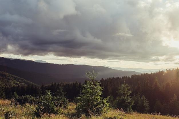 Słońce za świerkami na zielonym zboczu. namioty i dym w oddali. kilka chmur na pomarańczowym niebie o zachodzie słońca. ciepły letni wieczór. pasmo marmarosz, karpaty, ukraina