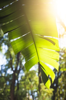 Słońce zaświeca though roślina liść