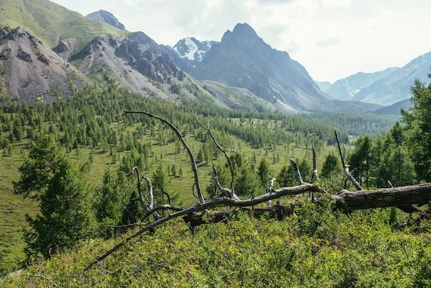 Słoneczna alpejska sceneria z suchym zaczepem wśród zielonych traw z widokiem na wielki, ostry szczyt góry. malowniczy krajobraz górski z suchym drzewem wśród bujnej roślinności na tle szczytu wysokiej góry.