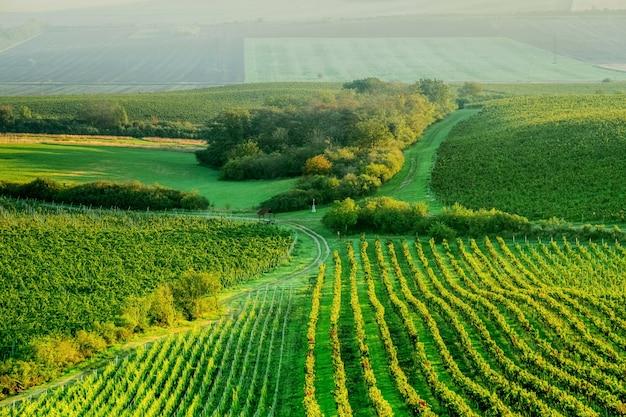 Słoneczna plantacja winogron