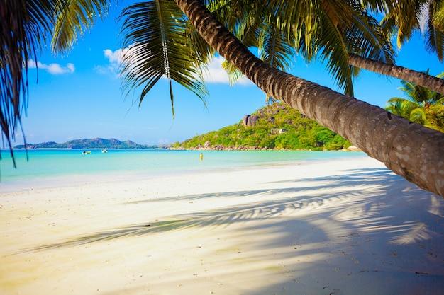 Słoneczna tropikalna rajska plaża z białym piaskiem i palmami