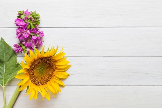 Słonecznik i różowa kwitnienie roślina