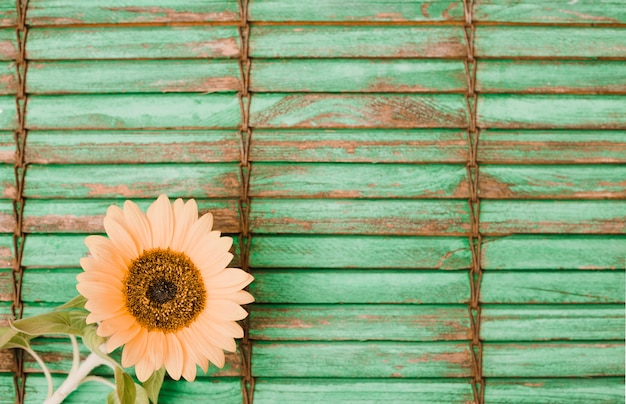 Słonecznik na rogu drewniane paski tle