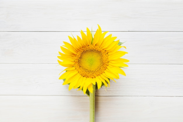 Słonecznik na stole