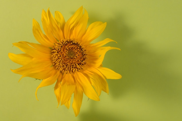 Słonecznik na zielonym tle papieru minimalistyczny kwiatowy tło