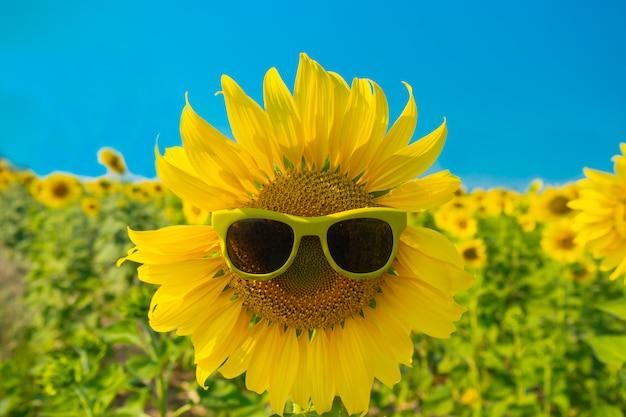 Słonecznik z okularami przeciwsłonecznymi