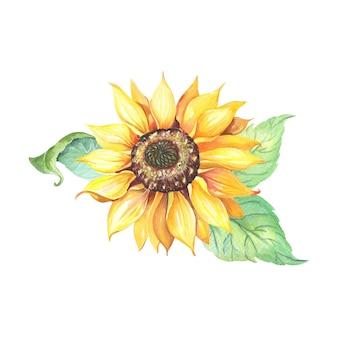 Słonecznik z zielonymi liśćmi