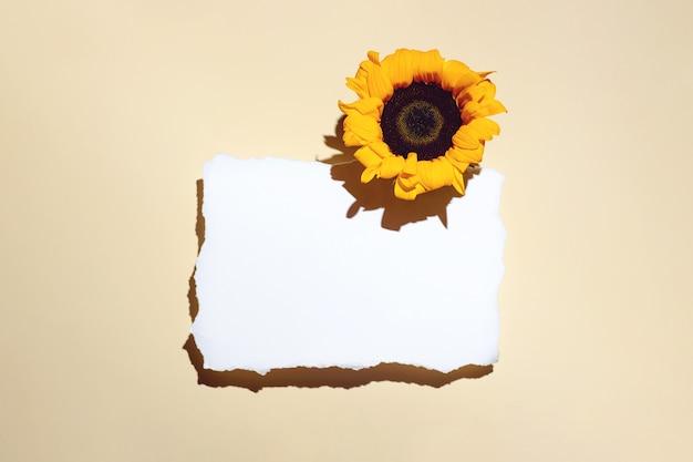 Słoneczniki i pusty arkusz papieru. z ciasnym cieniem na jasnym tle