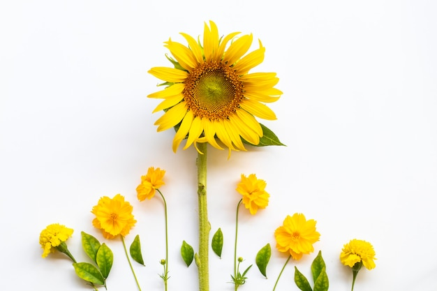 Słoneczniki kosmos układania kwiatów w stylu pocztówki