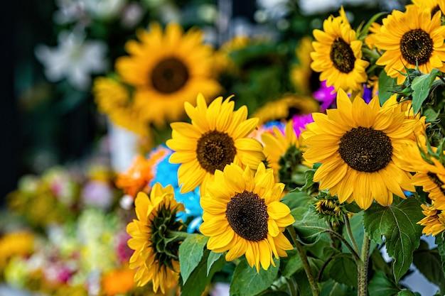 Słoneczniki na targu kwiatowym, jasne kolorowe kwiaty