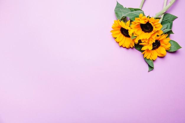 Słoneczniki w prawym górnym rogu