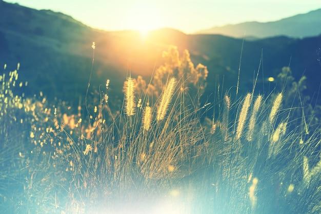 Słoneczny dzień na łące