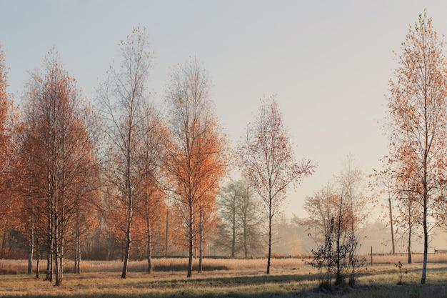 Słoneczny jesień krajobraz z mrozem