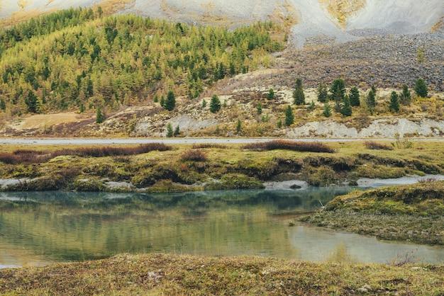 Słoneczny jesienny krajobraz z górskim potoku z widokiem na nasłonecznione wzgórze złotego lasu. złote dekoracje jesienne z turkusowym strumieniem czystej wody. zielone, piaszczyste dno w przezroczystej wodzie w słońcu