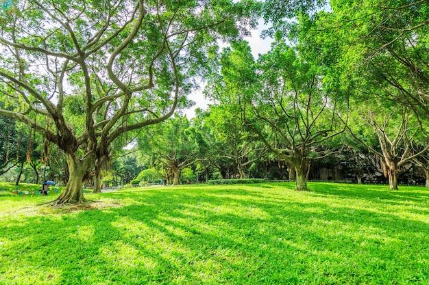 Słoneczny las i łąka w parku