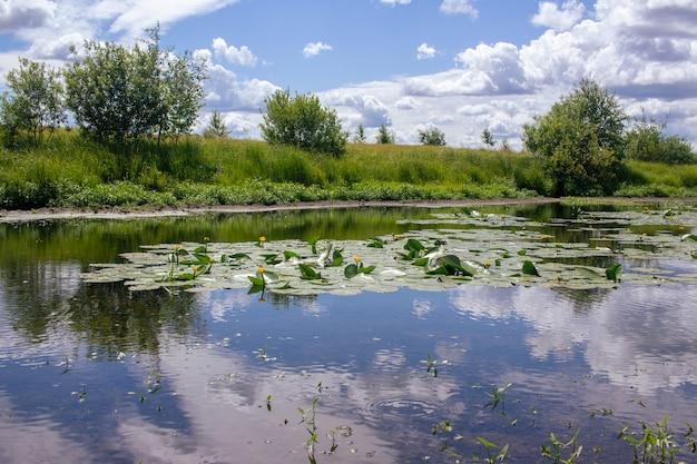 Słoneczny letni dzień błękitne niebo z chmurami odbija się w stawie z liliami wodnymi.
