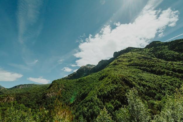 Słoneczny skalisty krajobraz z roślinnością