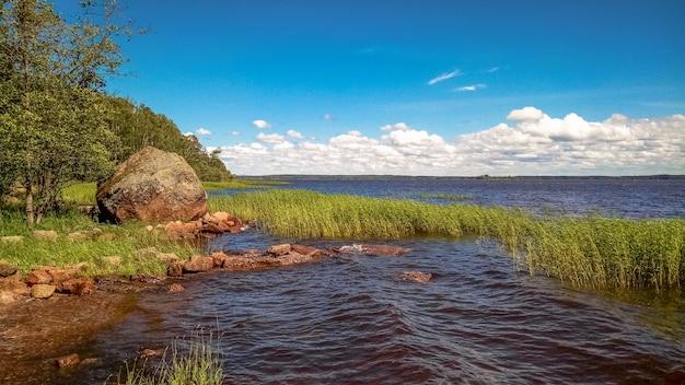 Słoneczny skandynawski las z granitowymi głazami.