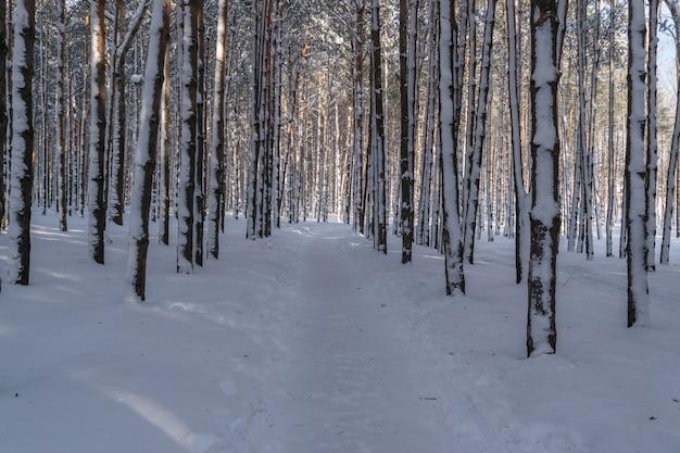Słoneczny zimowy dzień lasu w parku
