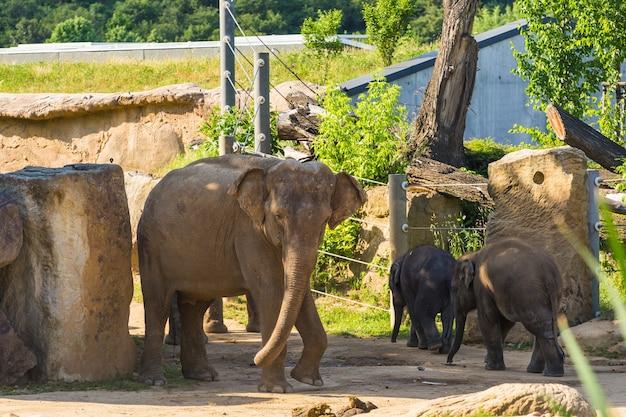 Słoniątka z matką w parku