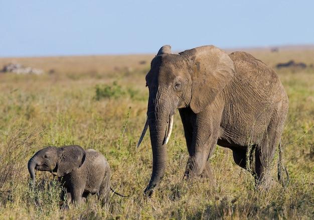 Słoniątka z matką.