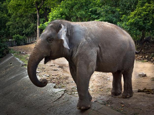 Słonie azjatyckie stoją pośród dzikiej przyrody
