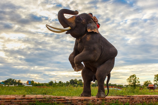 Słonie i stara stupa w prowincji ayutthaya w tajlandii