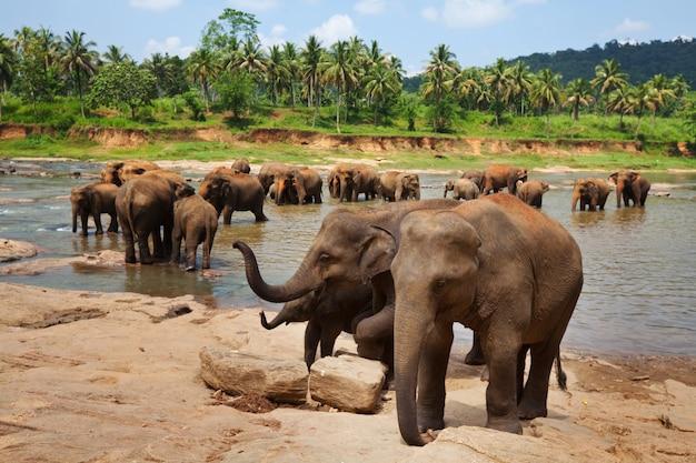 Słonie na sri lance